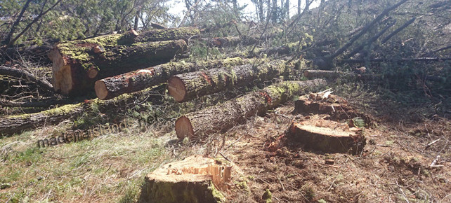Trees cut down at Ecological Park